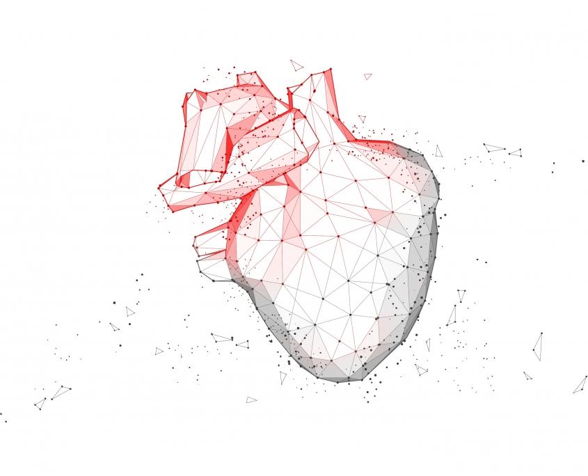 Herz Sportmedizin